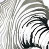 ink contour sketch
