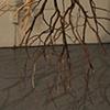 Branch Drawing Installation