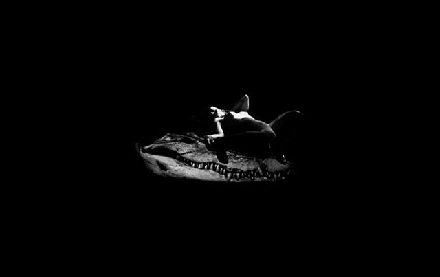 Crocodile Strip Tease