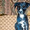 Schueler Dog