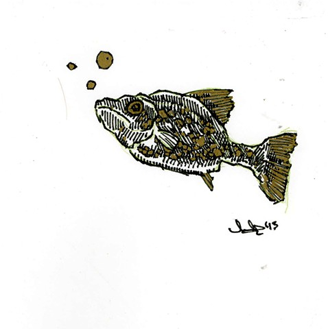 Little Inky Fish