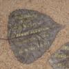 Not-a-Blog 1, 2006