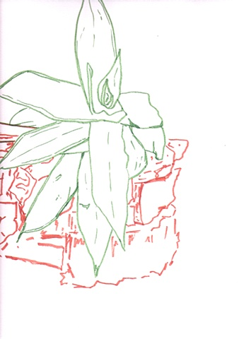 Hortus Botanicus  January 16, 2010
