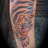 Korean Tiger