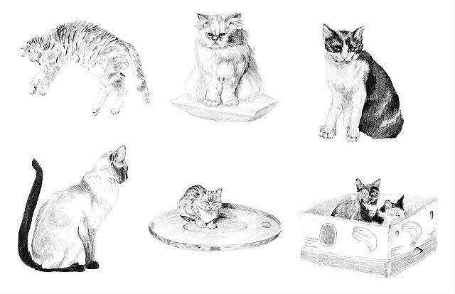 Cat spot illustrations, Little Burgundy