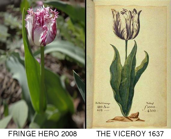 Fringe Hero vs. The Viceroy