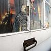 Marcia's Window, Detail