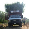 Loading the truck in South Puebla State