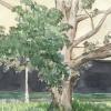 Rt. 183, Lenox (Tanglewood)
