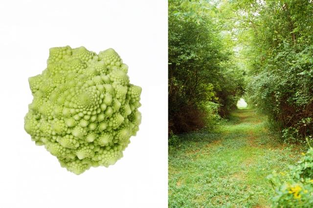 Romanesco cauliflower / Path, Martha's Vinyard, Ma.