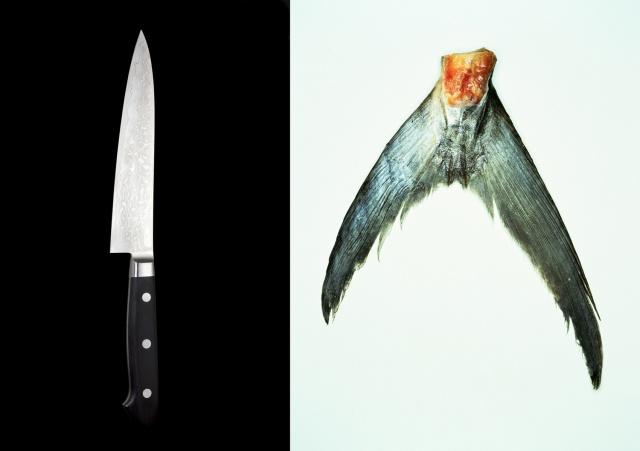 Togiharu knife / Spanish mackerel tail