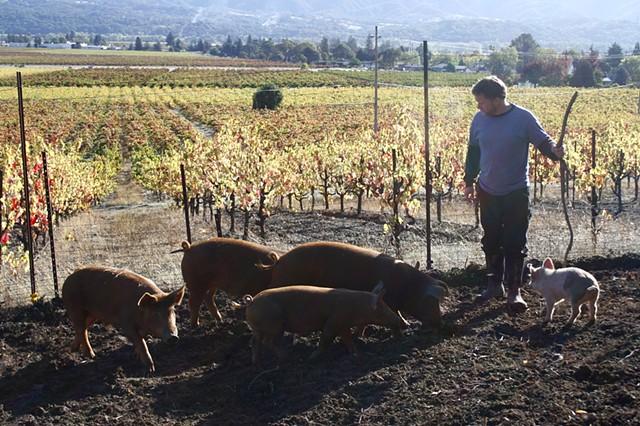 Lover's Lane Farm