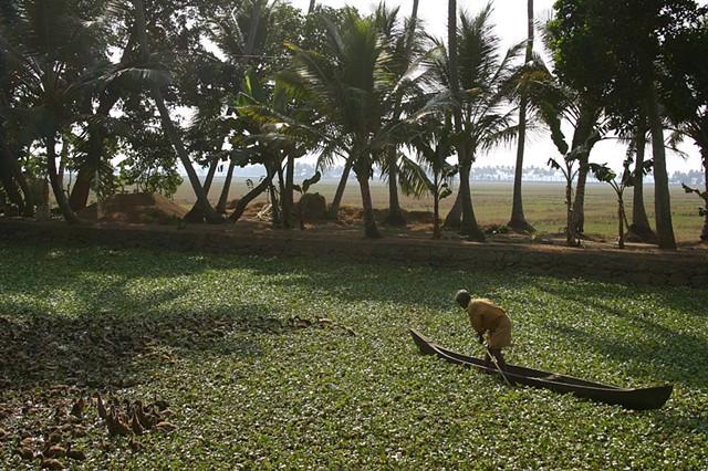 A man herds ducks in Kerala, India.