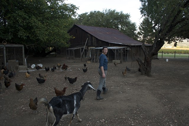 Taking the chickens to the coop, Lover's Lane Farm.