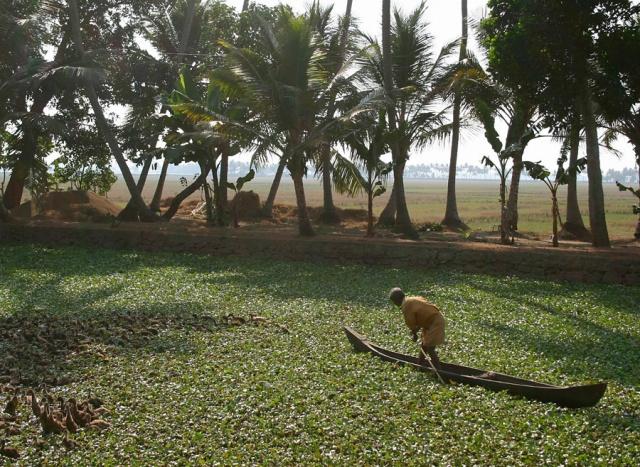 Herding Ducks, Kerala, India.