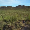 Saguaro National Park, Arizona.