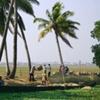 Transporting Rice, Kerala, India.