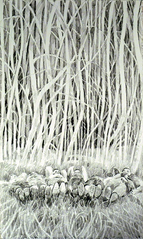 White Birches, Graphite on Arches Paper, 7 x 11in