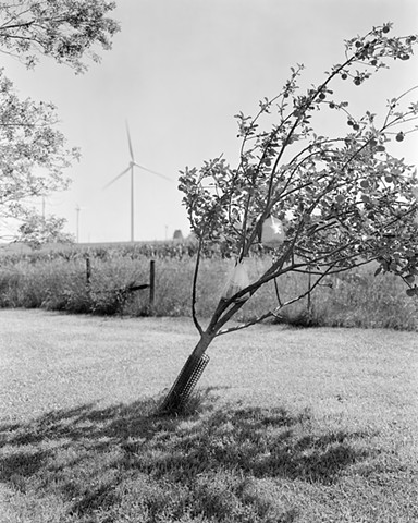 Apple Tree and Wind Turbines, Pipestone MN
