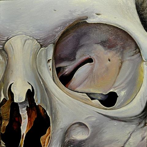 close up skull 4