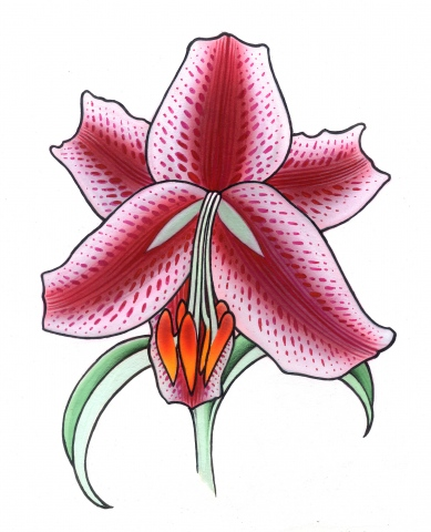 lily1
