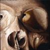 close up skull 2