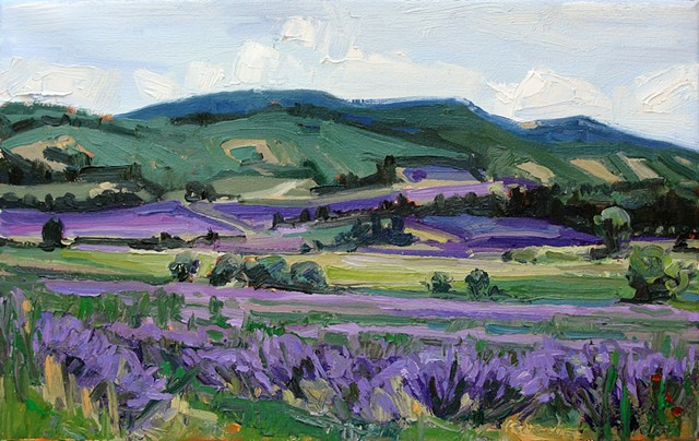 Lavender Fields at Sault,Provence