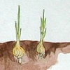 May you grow like an onion with your head in the ground!