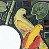 Parrot Mirror