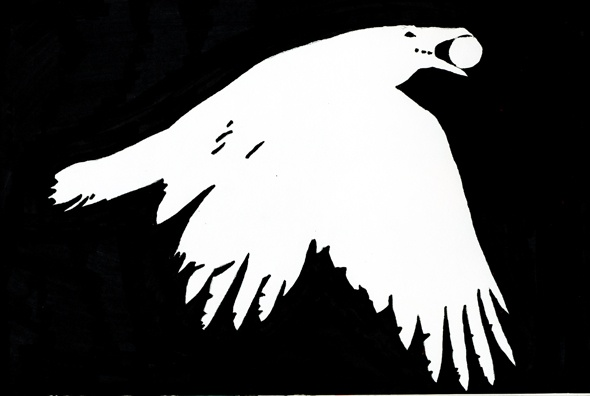 Raven in negative space