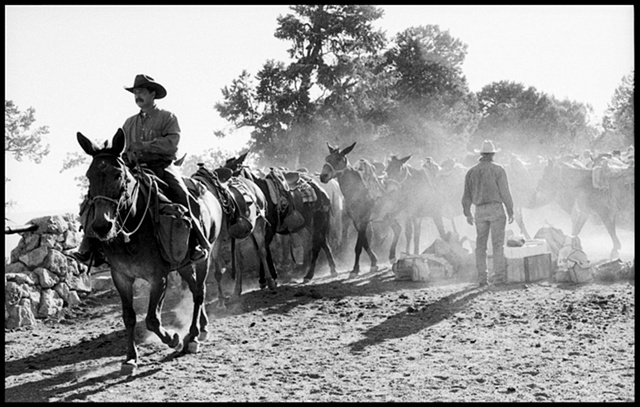 Grand Canyon , mule train, dusty mule ride, cowboy on mule