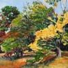 Fall Arboratum