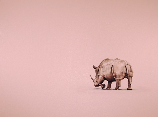 Rhino, silk sheets, pink